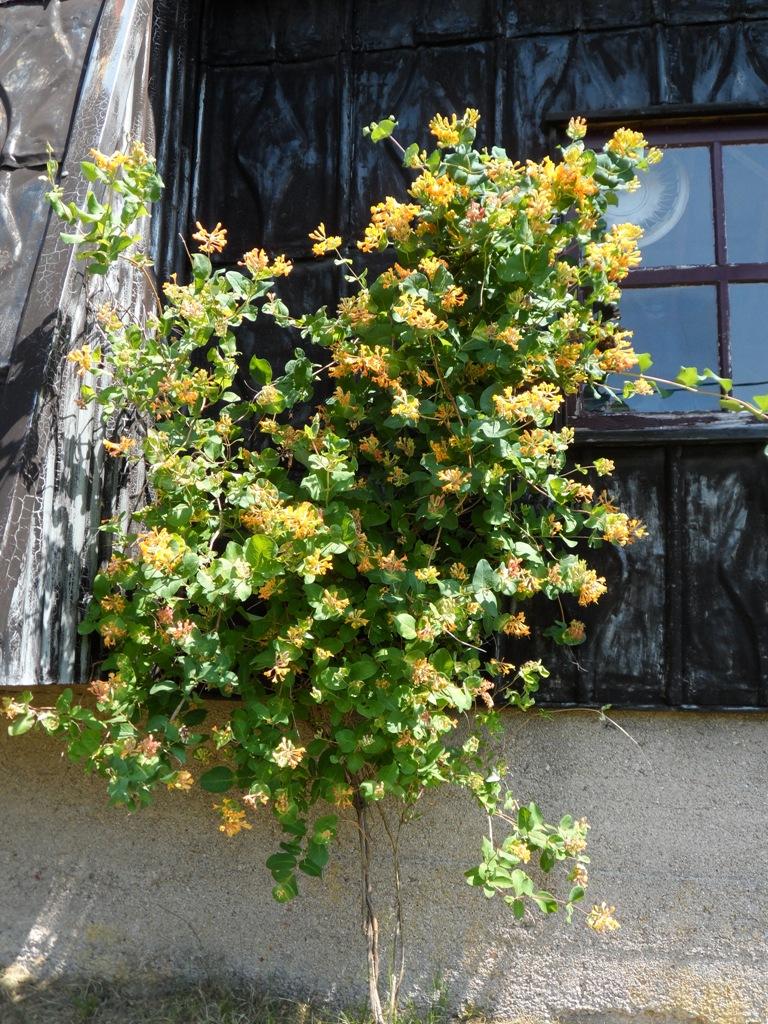 Un jardin toujours fleuri en été (2)